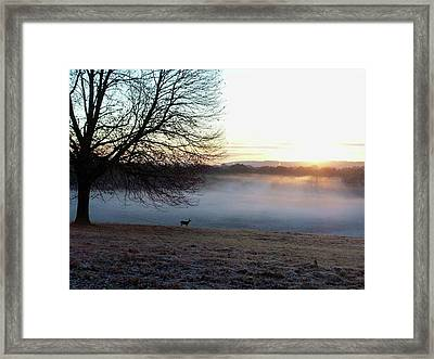 Deer At Dawn Framed Print