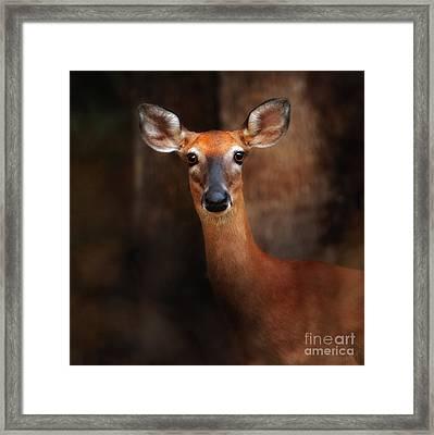 Deer At Dawn Framed Print