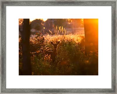Deer At Ojibway Park Framed Print