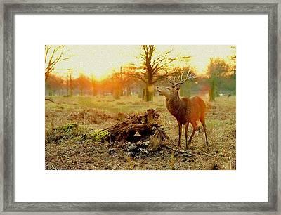 Deer At Sunrise H B Framed Print