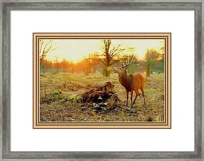 Deer At Sunrise H B With Decorative Ornate Printed Frame. Framed Print