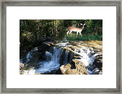 Framed Print featuring the photograph Deer At The Falls by Rick Friedle