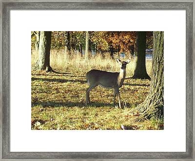 Deer At Valley Forge Framed Print