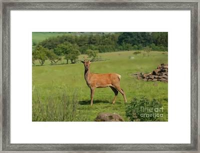 Deer Calf. Framed Print