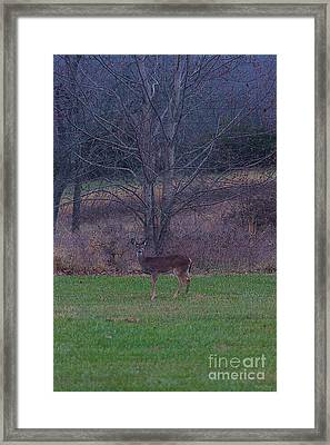 Deer Disquise Painterly Framed Print