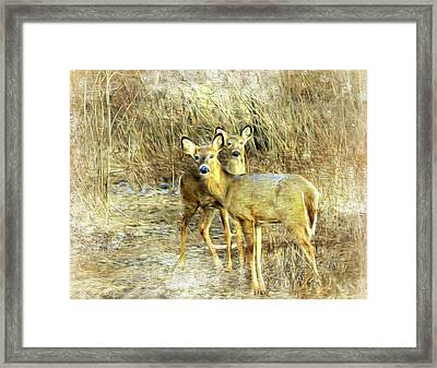 Deer Duo 6 Framed Print by Marty Koch