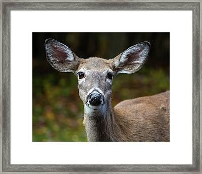 Deer Face Framed Print