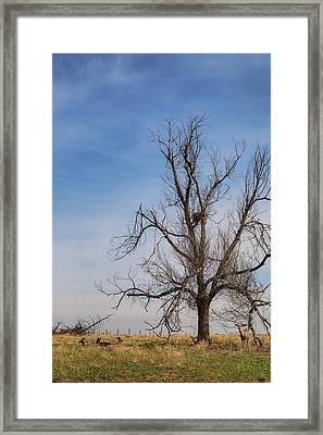Deer Herd Happy Family Framed Print by James BO Insogna