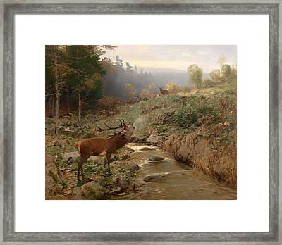 Deer Herd In A Forest Clearing Framed Print by Mountain Dreams