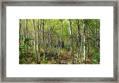 Deer Hide Framed Print