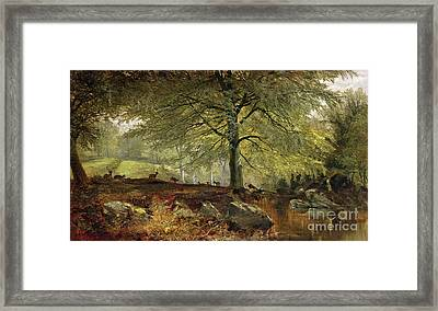 Deer In A Wood Framed Print by Joseph Adam