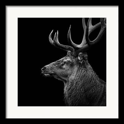 Deer Head Framed Prints