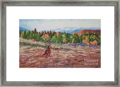 Deer In Fall Framed Print by Charlotte Blanchard
