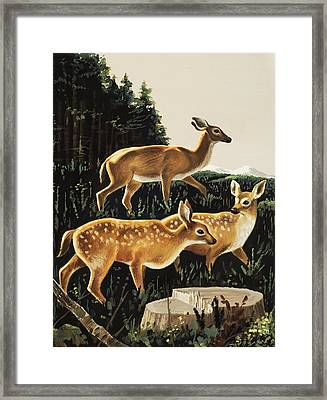 Deer In Forest Clearing Framed Print by English School