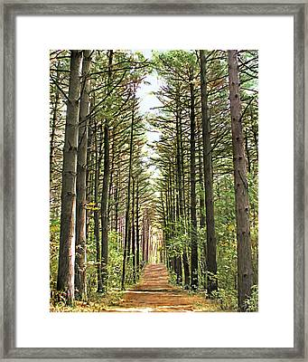 Deer In Forest Framed Print by Patty Muchka
