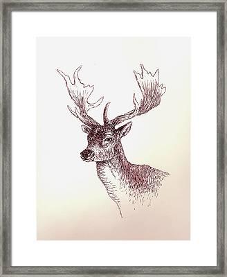 Deer In Ink Framed Print by Michael Vigliotti