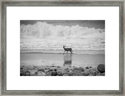 Deer In Ocean Black And White Framed Print