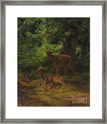 Deer In Repose Framed Print by Rosa Bonheur