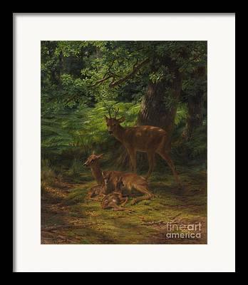 Nursing Deer Framed Prints