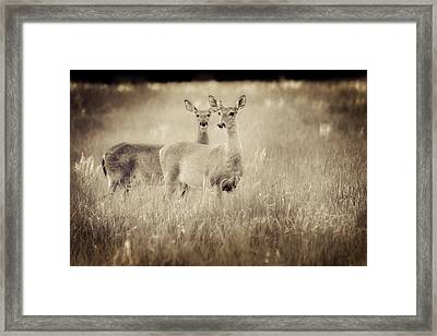 Deer In Sepia Framed Print