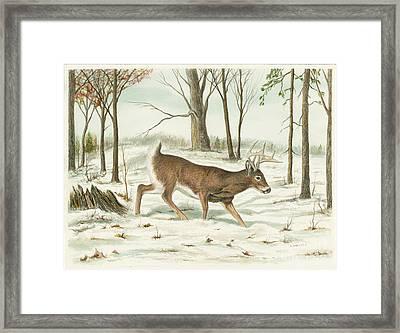 Deer In Snow Framed Print by Samuel Showman