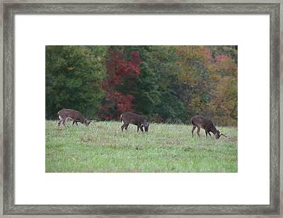 Deer In The Fall Framed Print by James Jones