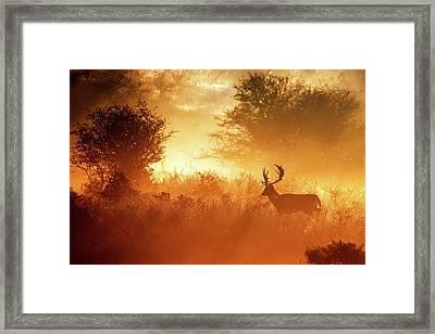 Deer In The Mist Framed Print