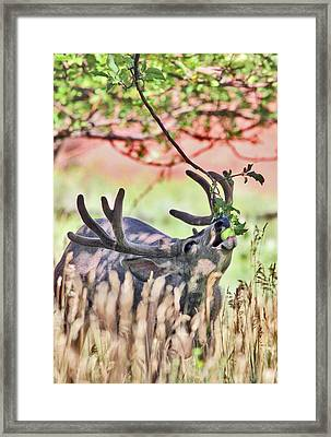 Framed Print featuring the photograph Deer In The Orchard by Wesley Aston