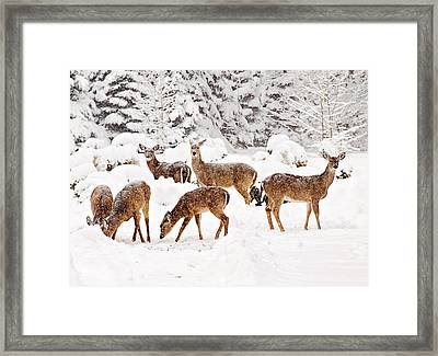 Framed Print featuring the photograph Deer In The Snow 2 by Angel Cher