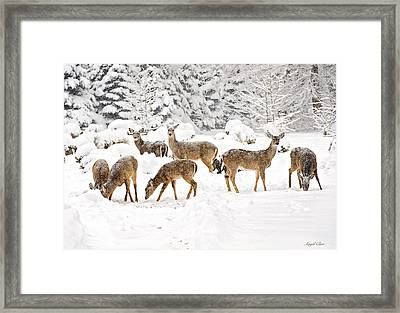Framed Print featuring the photograph Deer In The Snow by Angel Cher