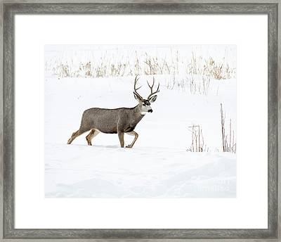 Framed Print featuring the photograph Deer In The Snow by Rebecca Margraf