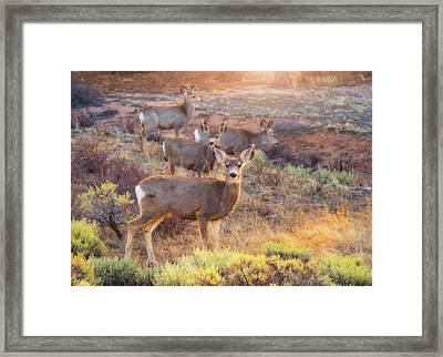 Framed Print featuring the photograph Deer In The Sunlight by Darren White