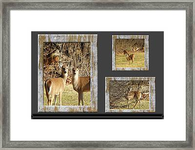 Deer Lovers Framed Print by Tina M Wenger
