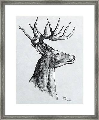 Framed Print featuring the drawing Deer by Michael  TMAD Finney