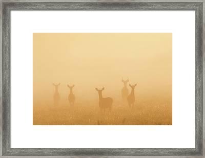 Deer Of The Fog Framed Print