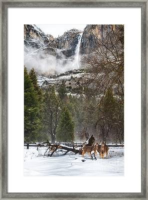 Deer Of Winter Framed Print