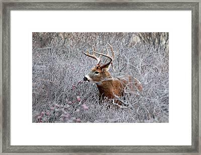 Deer On A Frosty Morning  Framed Print by Nancy Landry
