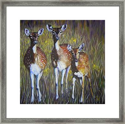 Deer On Guard Framed Print