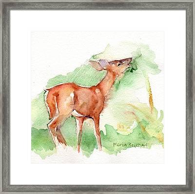 Deer Painting In Watercolor Framed Print