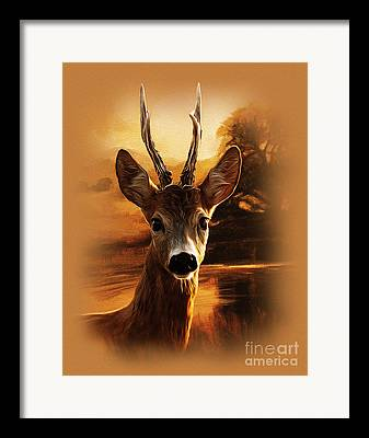 Whitetail Artwork Framed Prints