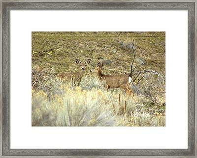 Deer Framed Print by Scott Gould