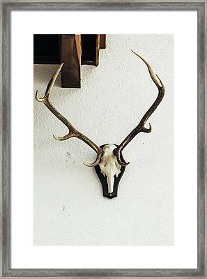 Deer Skull On Wall Framed Print by Pati Photography