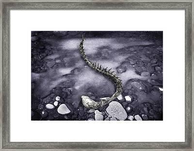 Deer Vertebrae Framed Print by Yuri Lev