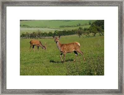 Deers On A Hill Pasture. Framed Print
