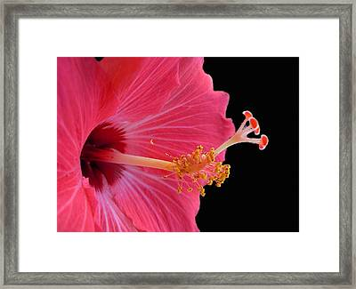 Defined Theory Framed Print