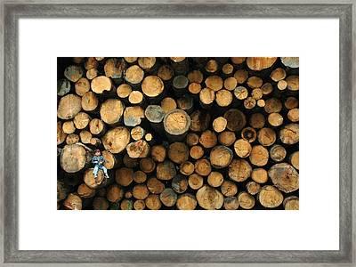 Deforestation Framed Print by Gaffuri Mario