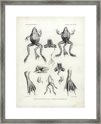 Deformed Frogs - Historic Framed Print