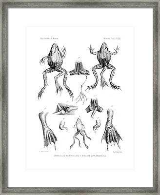 Deformed Frogs Framed Print