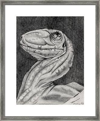 Deino Hatch Sketch Framed Print