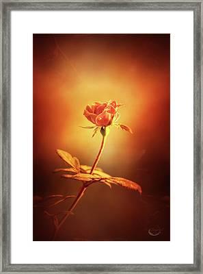 Deja Vu Framed Print by Theresa Campbell
